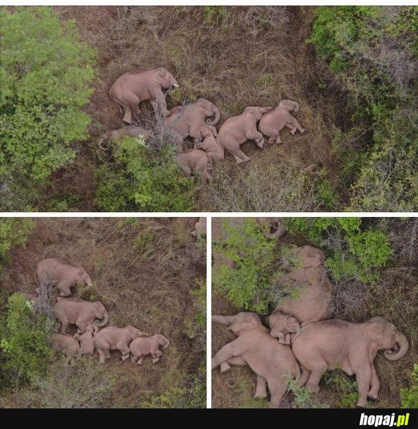 Odpoczynek słoni