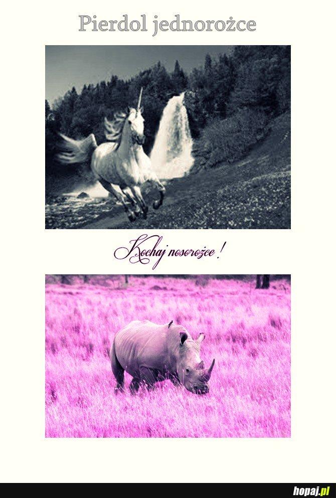 Nosorożce <3