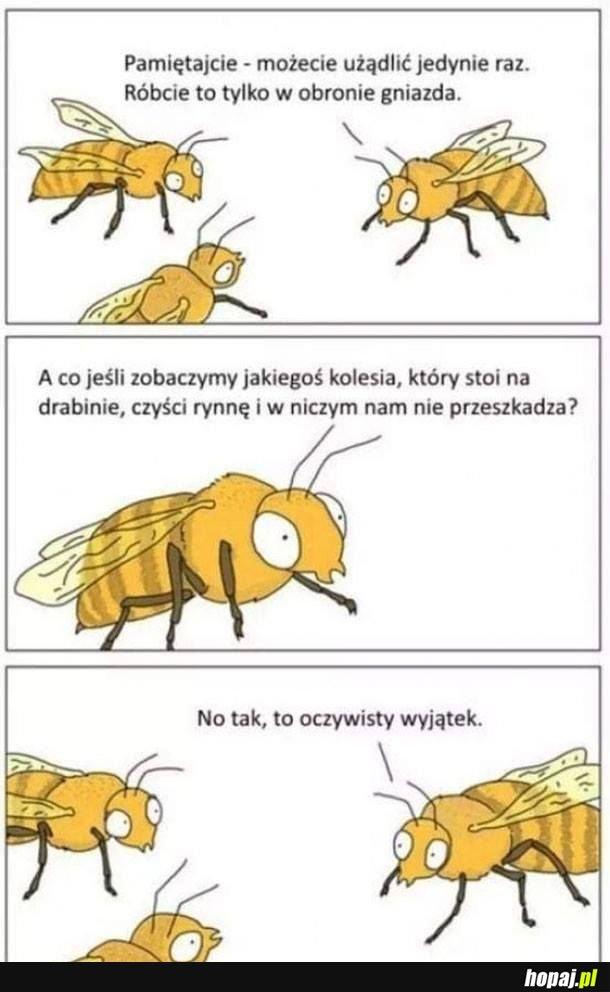 Pszczoły razem silne