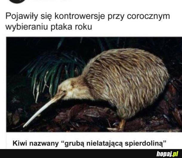 Biedny Kiwi