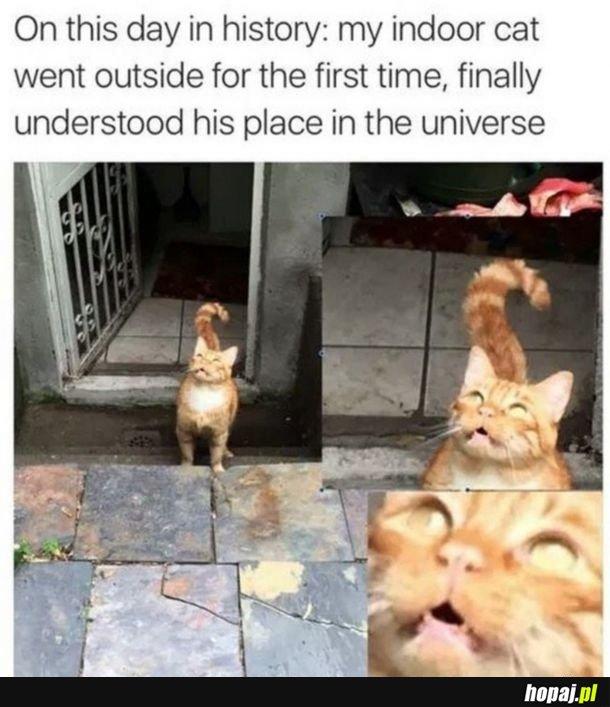 Kot domowy pierwszy raz na zewnątrz.