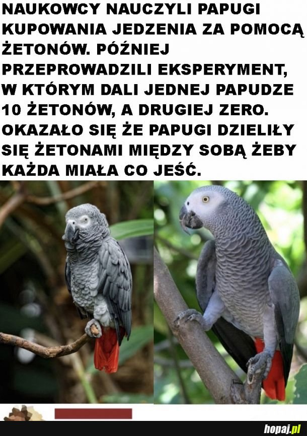 Kiedy papugi są bardziej ludzkie niż ludzie