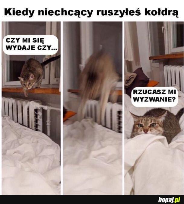 Prowokowanie kota