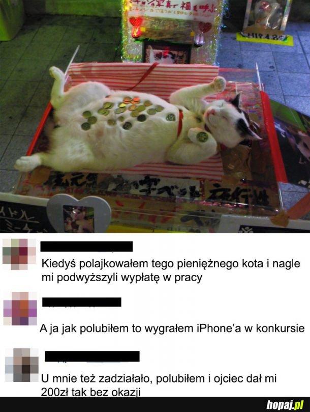 Kot na szczęście