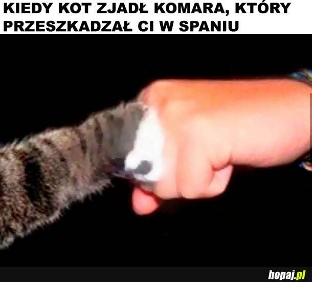 Pomocny kot
