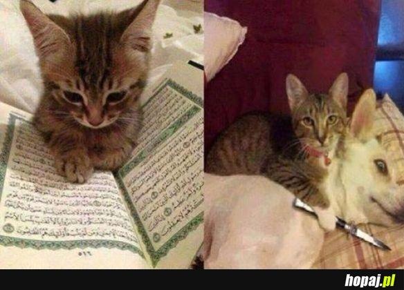 Kotek terrorysta