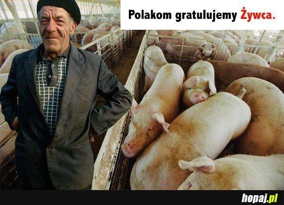 Polakom gratulujemy żywca