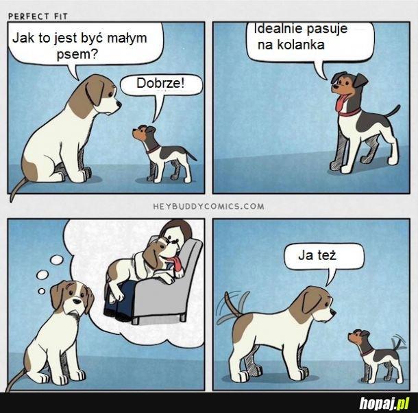 Pieski żywot