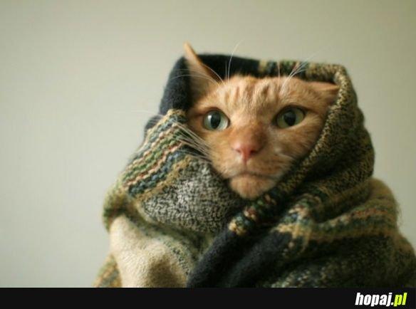 Kocowy koteł