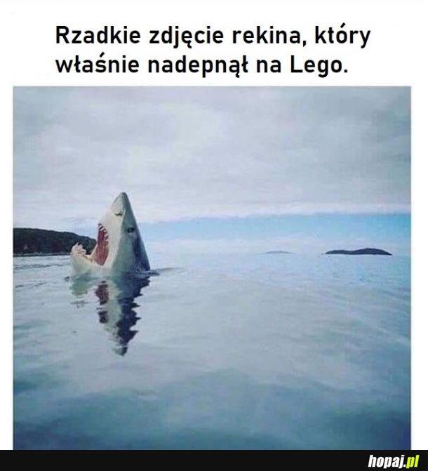 Rekiny też mają ten problem