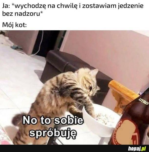 Kotek i jedzenie