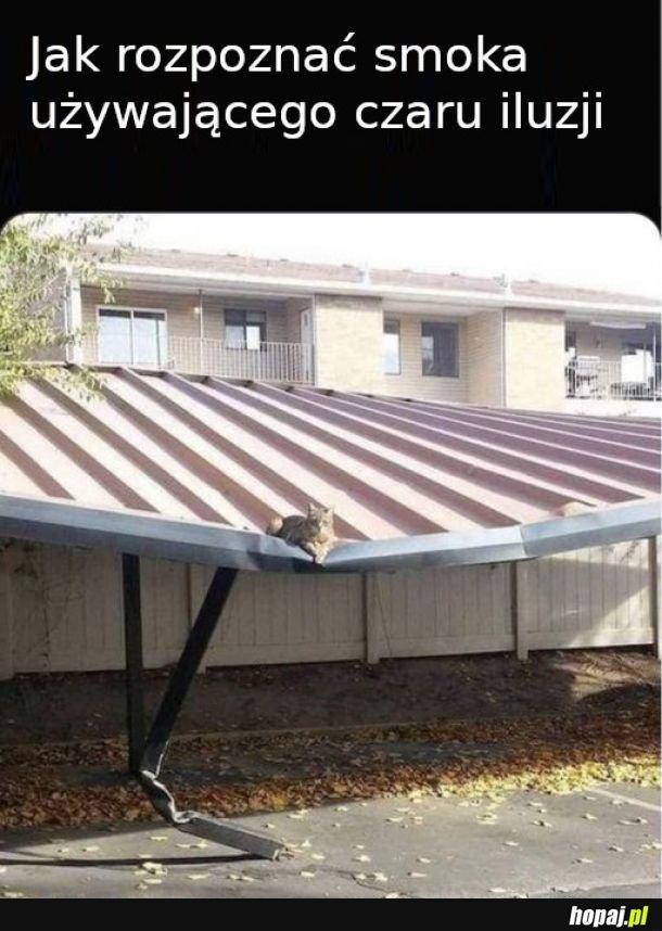 Kot czy nie kot