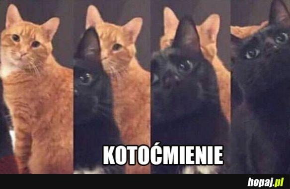 Zabawne kotki