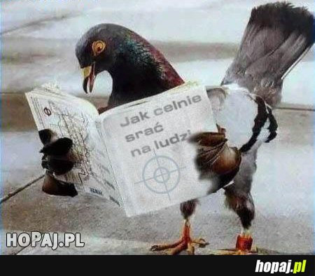 Czego uczą się gołębie?