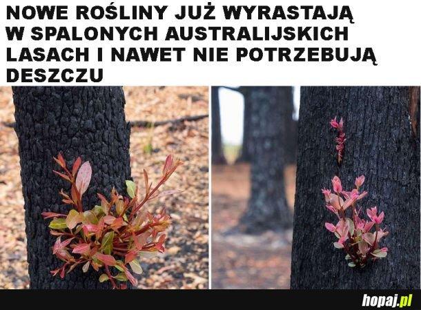 Przyroda zawsze sobie poradzi
