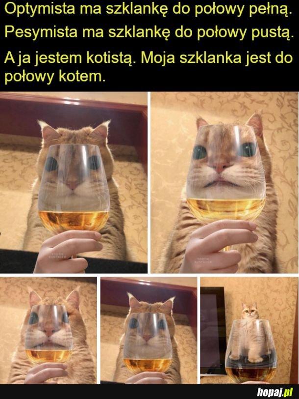 Jestę kotistę