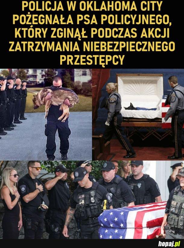 Psi policjant