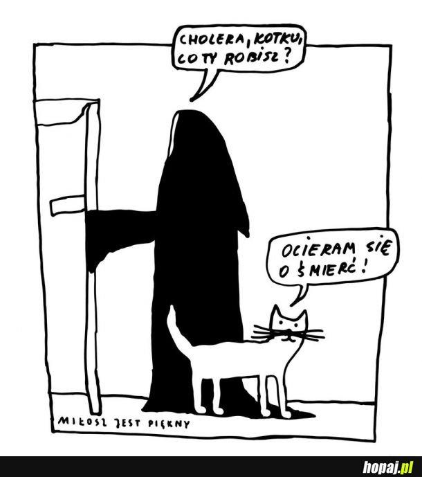 Kotek ryzykant