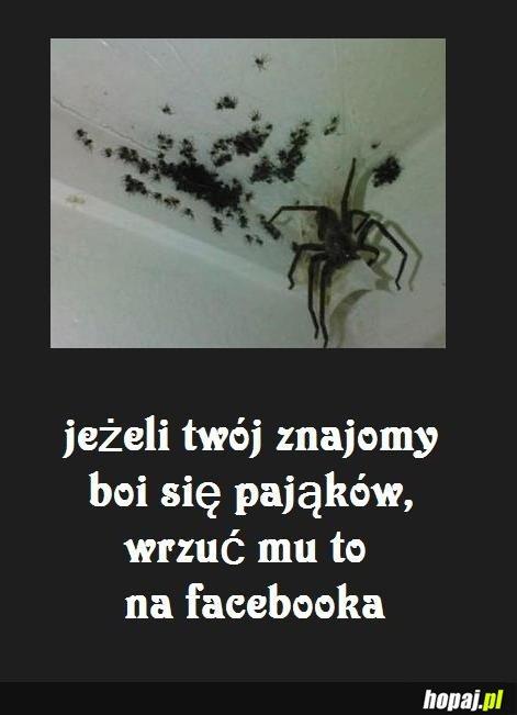 Jeżeli twój znajomy boi się pająków...