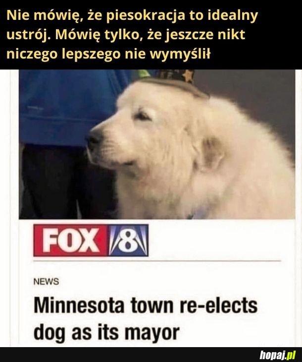 Głosowałbym