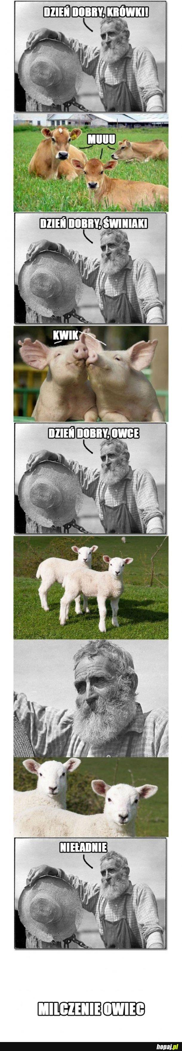 Milczenie owiec