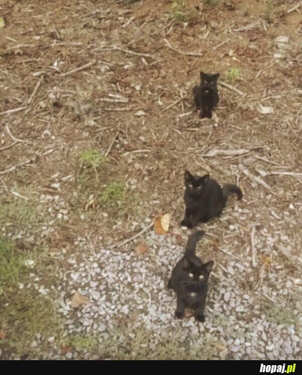 To tylko cztery kotki, przewijaj dalej...