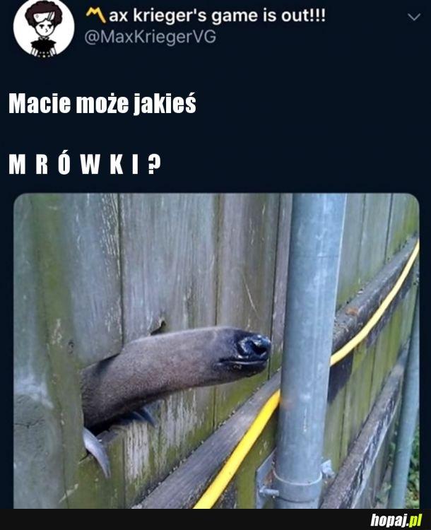 M R Ó W K I Bracie M R Ó W K I