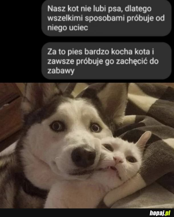 Pies i kot, kot i pies przyjaciele od laaat