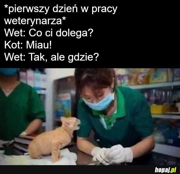 Lekarzem zwierząt być