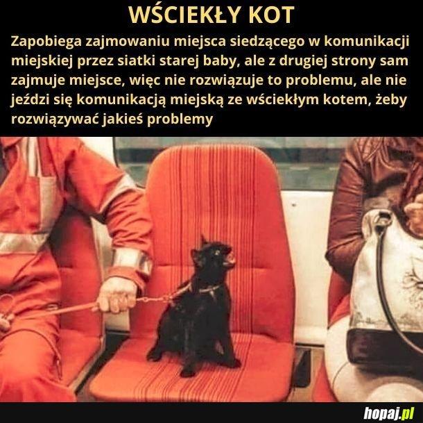 Wściekły kot