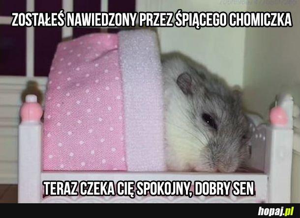 Śpiący chomiczek