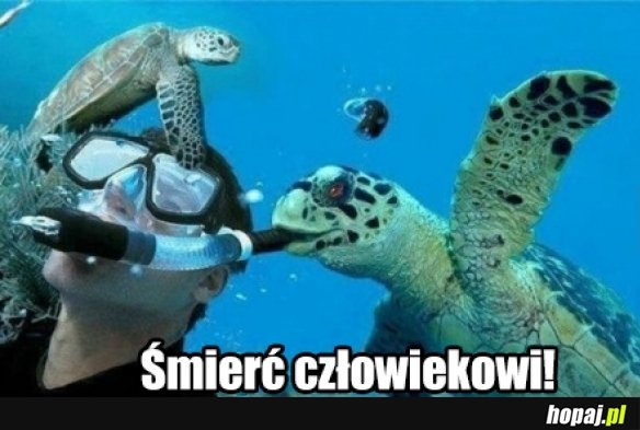 Żółw zabójca