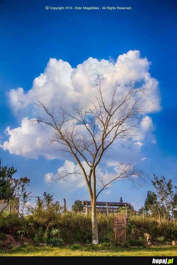 Drzewo chmurkowe