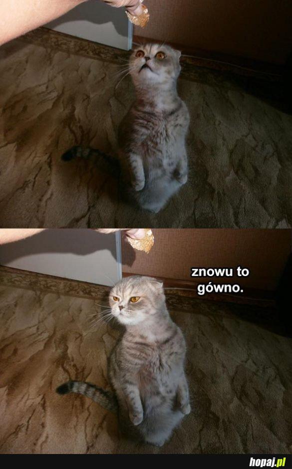 Niezadowolony koteł