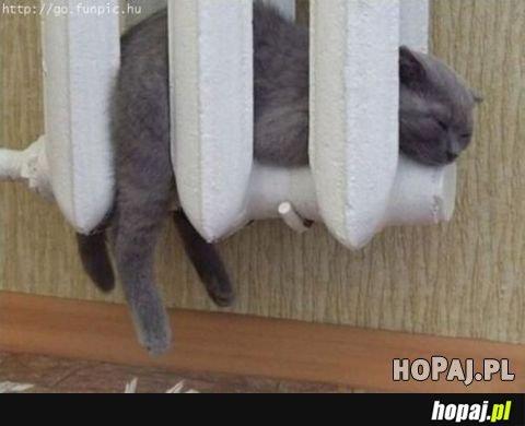 Kot w kaloryferze :D