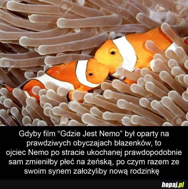 Teraz już wiem dlaczego ojciec Nemo tak bardzo chciał go znaleźć