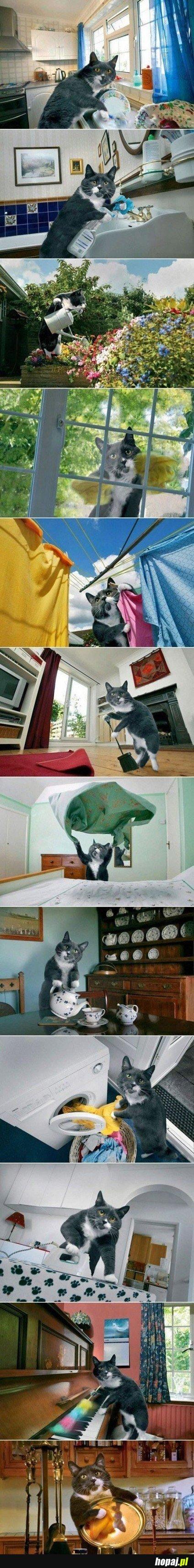 Co można zrobić z jednym zdjęciem kota?