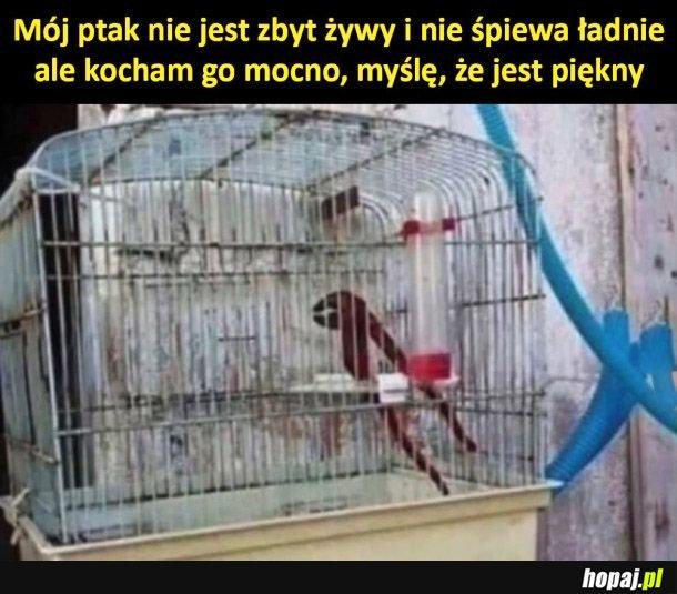 Mój ptak