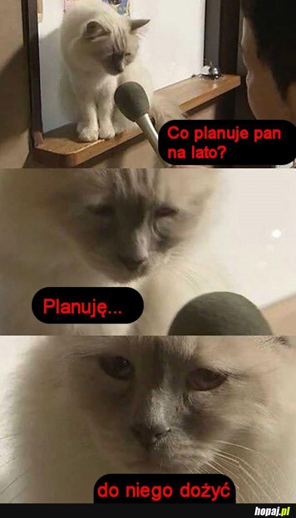 Plany kitku