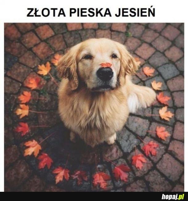 Pieska jesień
