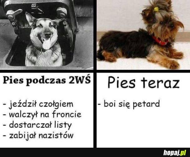 Ciężkie jest życie psa