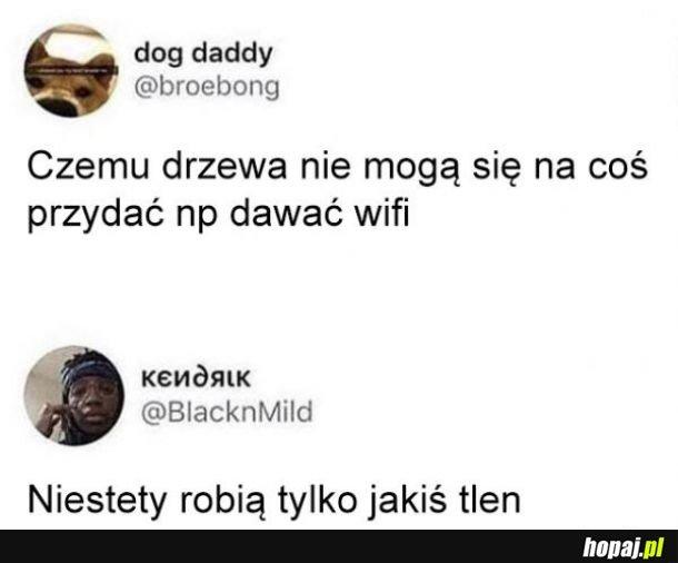 Wifi i drzewa